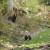 Carnivora Dinarica: Rješenje za suživot poljoprivrednika i divljih zvijeri postoji