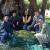 Crna Gora: Maslina stara 2.245 godina dala više od 100 kilograma roda