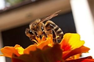 Istine i zablude o medu: Kako prepoznati pravi?
