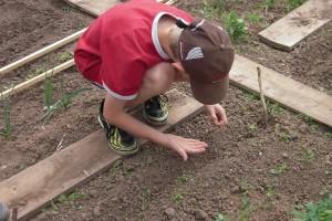 Osnovci uzgajaju organsko povrće u školskom plasteniku