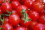 Proizvodnja cherry rajčica