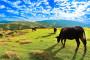 Tajvan uspio u agroturizmu, uspjet će i Hrvatska