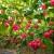 Proizvodnja čili papričica na jugu Srbije ima dobru proizvodnu šansu
