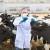 Ukidaju se ograničenja za premještanje goveda u Hrvatskoj zbog bolesti kvrgave kože