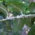 Ako vidite bele prevlake na vinovoj lozi, u pitanju je cikada Metcalfa pruinosa