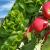 Za ekološku proizvodnju odaberite Unimer gnojiva vrhunske kvalitete