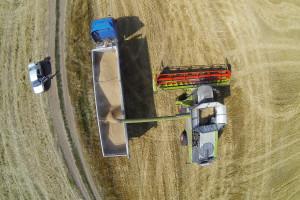 Više od polovice proizvođača pšenice bez prihoda u 2020. godini