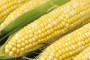 Profitabilnost proizvodnje kukuruza