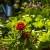 Dragocjeno vrijeme: Napravite vrt koji se lako održava