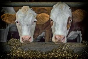 EU planira poboljšati održivost mljekarskog sektora