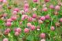 Važnost zelene gnojidbe u poljoprivrednoj proizvodnji