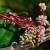 Vilina kosica - opasan korov na djetelini može štetiti i stoci