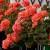 Koje balkonsko cvijeće voli sunce, a koje hladovinu?