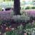 Cvijeće koje uspijeva u hladovini ispod drveta