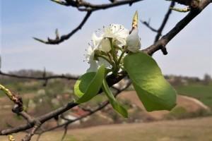 Toplo i nestabilno vreme - povoljni uslovi za infekciju biljnog tkiva