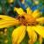 Pet vrsta cveća koje privlači korisneinsekteu vašu baštu