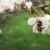 Cvetanje voća donosi strepnju pčelarima