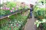 Kenija - najbrže rastuća industrija cvijeća?