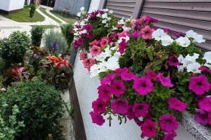 I cvijeće treba redovnu prihranu za bujan rast i intenzivne boje