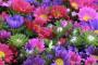 Prihrana cvijeća