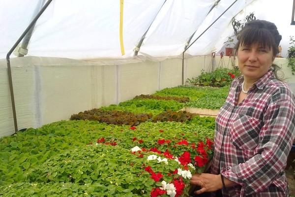 Gavranovići na 400m2 proizvode nekoliko desetina hiljada sadnica