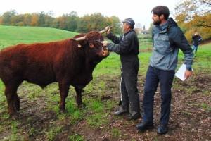 Jača uzgoj goveda u sustavu krava-tele na krškim područjima?