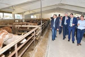 Otvorena farma junadi Šumbar, cilj je doći do 15.000 junadi godišnje