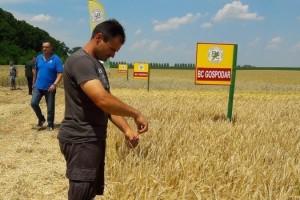 Ivica Ikić: Ne pamtimo da su kombajni ikada u polja ulazili u svibnju, neke površine ječma već požnjevene
