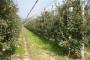 Osposobite se za poslove voćara i vinogradara