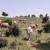Različiti podaci koče raspolaganje poljoprivrednim zemljištem i krškim pašnjacima