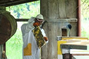 OPG Čajko: Od pčelica djeda Tome do Kuće meda