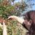 Vreme za berbu trnjina i gloginja - nakon mraza odlične za preradu