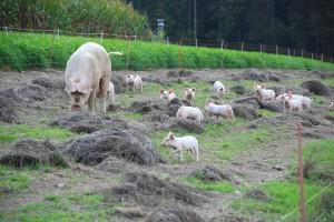 Ogromna sredstva na ekološku poljoprivredu ulaže - Danska!