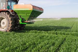 Pravilnom prihranom ozimog žita do visokih prinosa