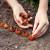 Početak veljače je vrijeme za sadnju lukovica
