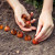 Prolećna sadnja lukovica i krtole - na šta obratiti pažnju