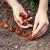 Proljetna sadnja lukovica i gomolja - na šta obratiti pažnju