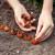 Proljetna sadnja lukovica i gomolja - na što obratiti pažnju