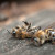Alarmantno stanje u pčelarstvu, pčelari traže proglašenje elementarne nepogode