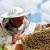Pčelarima u Vojvodini šest miliona dinara