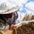 Zrenjanin odvojio četiri miliona za pčelare: Konkurs otvoren do utorka