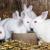Ruska vakcina: 17.000 doza protiv COVID-a za životinje spremna za isporuku