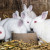 Rusko cjepivo: 17.000 doza protiv Covida za životinje spremno za isporuku