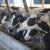 Posljednje mliječne krave prodao ovog proljeća - presudila niska cijena i troškovi