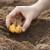 Radovi u svibnju: Kako da vaš vrt zasja gladiolama i dalijama