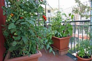 Proizvodnja hrane u urbanoj bašti i njezine prednosti
