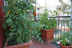 Proizvodnja hrane u urbanom vrtu i njezine prednosti