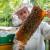Pripremite pčelinja društva u avgustu za sledeću sezonu