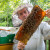 U augustu pripremite pčelinja društva za narednu sezonu