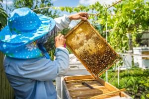 Postani pčelar/ka: Nikad nije kasno, prijavi se na edukaciju i stekni potrebna znanja!